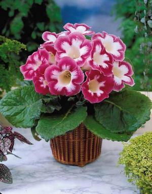 Комнатные цветы и растения, садовые цветы и их названия